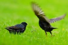 bird-1372064016cg9